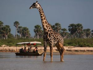 5 days selous mikumi safari from Zanzibar