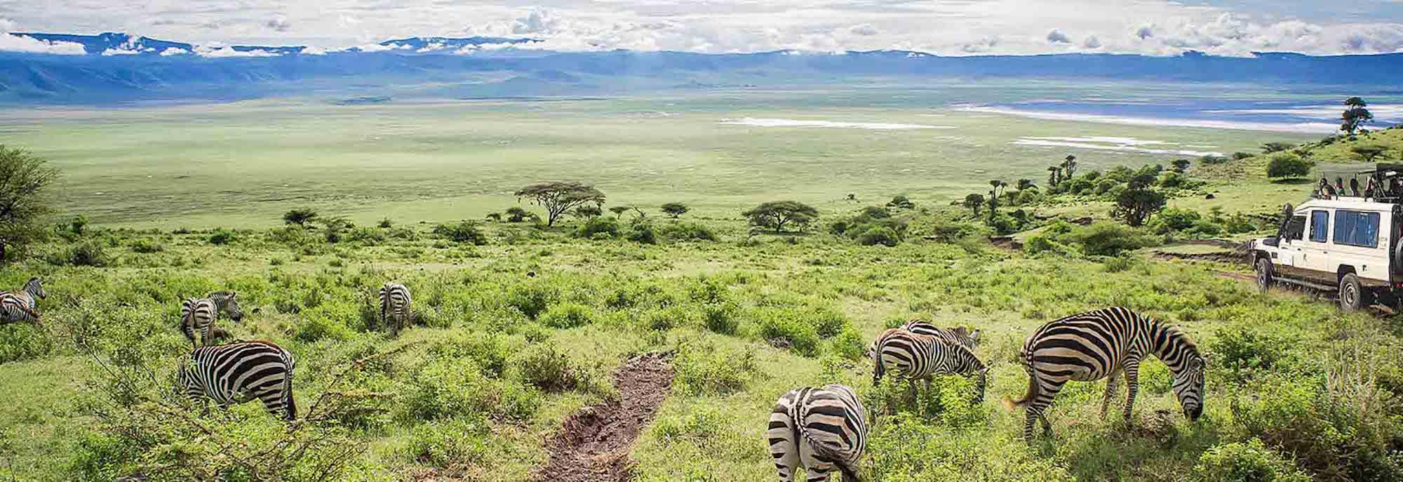 Ngorongoro Conservation Area | Ngorongoro Crater