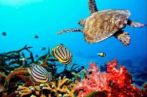 best diving in Zanzibar