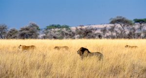 best time to travel tanzania