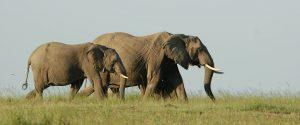 best time for safari Tanzania