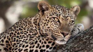 Zanzibar safari Serengeti