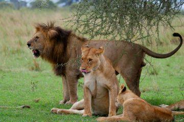 10 day Tanzania Kenya safari