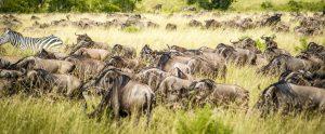 10 days Tanzania Kenya safari