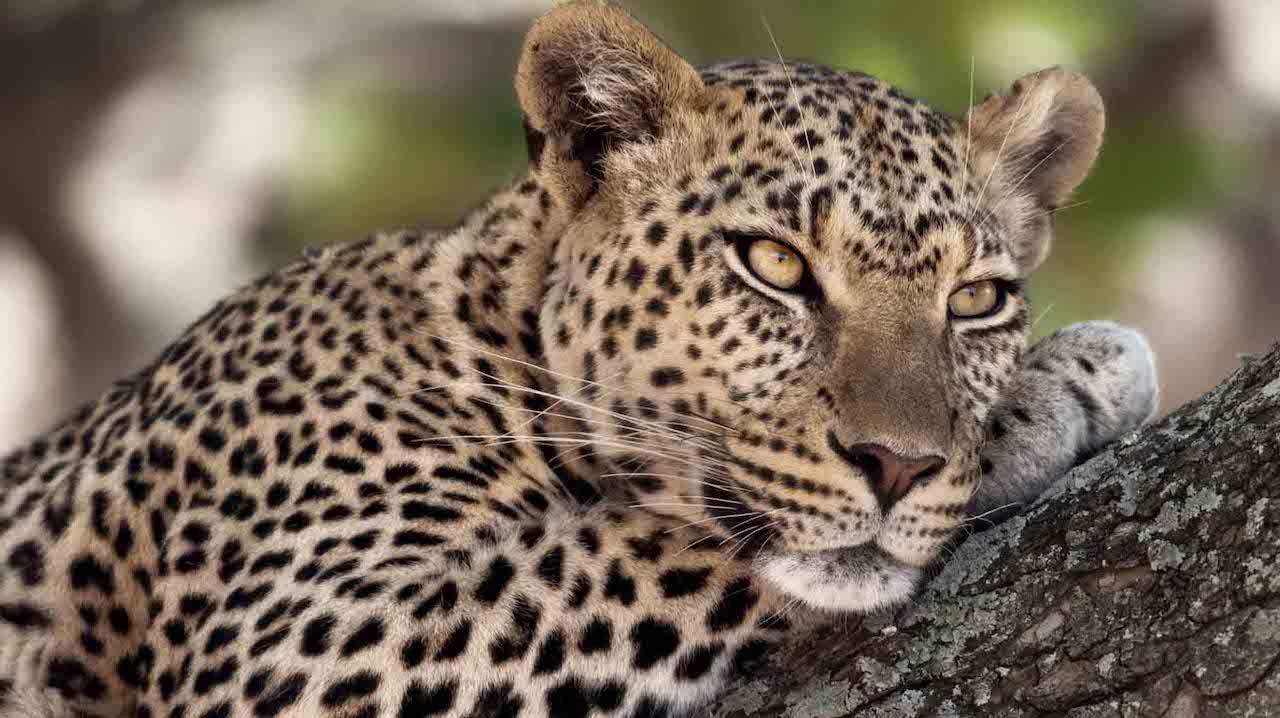 8 day safari Tanzania Zanzibar beach holiday