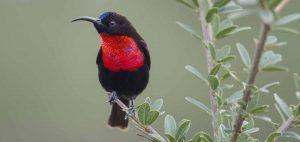 Choosing Tanzania birding safari