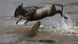 Kenya Tanzania safari migration