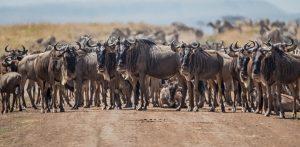 safari Tanzania cost price