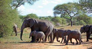 Kenya Safari Amboseli