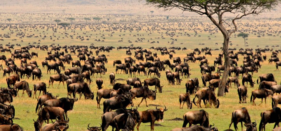Migration safari kenya Tanzania