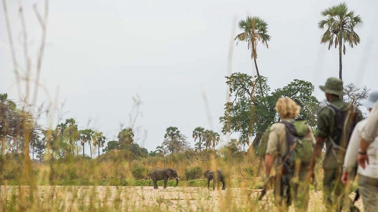 Walking Safari South Tanzania