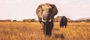 safari in Tanzania private