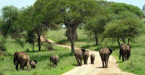 Four Days Safari Tanzania