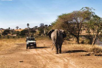 4 days safari tanzania