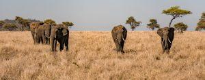 8 days Luxury Tanzania trip