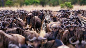 Tanzania safari and Zanzibar beach holidays