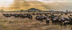 Northern Tanzania Vs Southern Tanzania Safari
