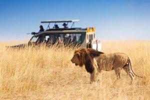 Safaris Tanzania Post Covid Safety