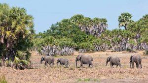 Southern Safari Selous
