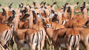 6 days Tanzania budget safari camping