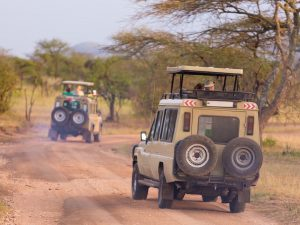 Typical day on safari Tanzania Africa