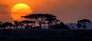 A typical day on Africa safari Tanzania