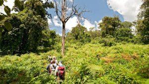 Chimpanzee Trekking Mahale Tanzania