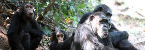 Gombe National Park Tanzania
