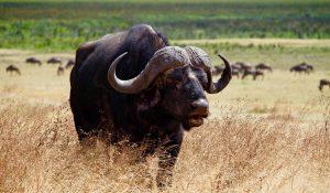 African Safari Big Five