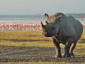 Rhino Big Five