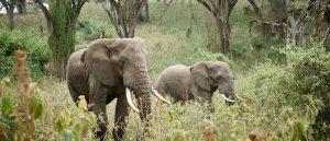 The Big 5 on safari in Tanzania