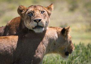 2 day Tanzania safari from zanzibar
