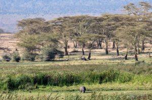 2 days safari from Zanzibar Hippo Grazing