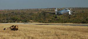 is there safari zanzibar?