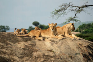 Tanzania safari best time to visit