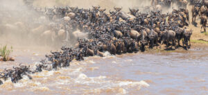 best time to visit Tanzania for safari